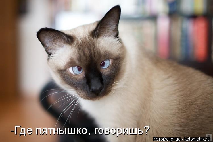 Котоматрица: -Где пятнышко, говоришь?