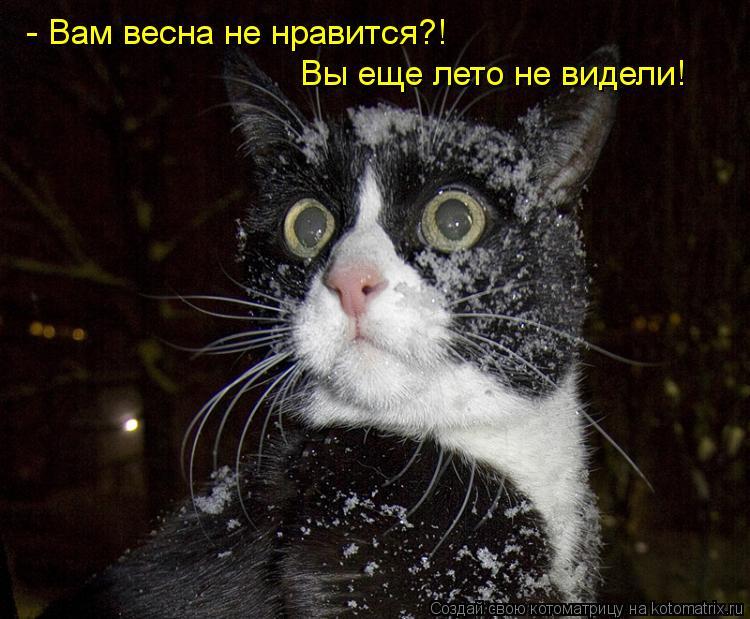Котоматрица: - Вам весна не нравится?! Вы еще лето не видели!