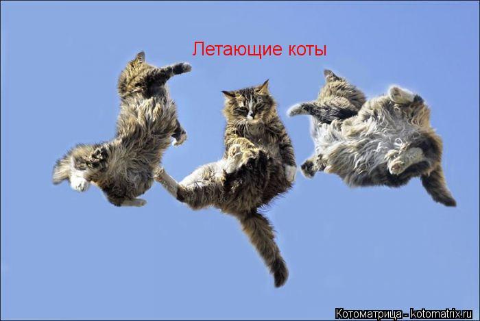 Котоматрица: Летающие коты