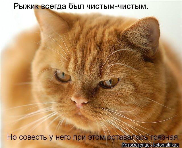 Котоматрица: Рыжик всегда был чистым-чистым. Но совесть у него при этом оставалась грязная.