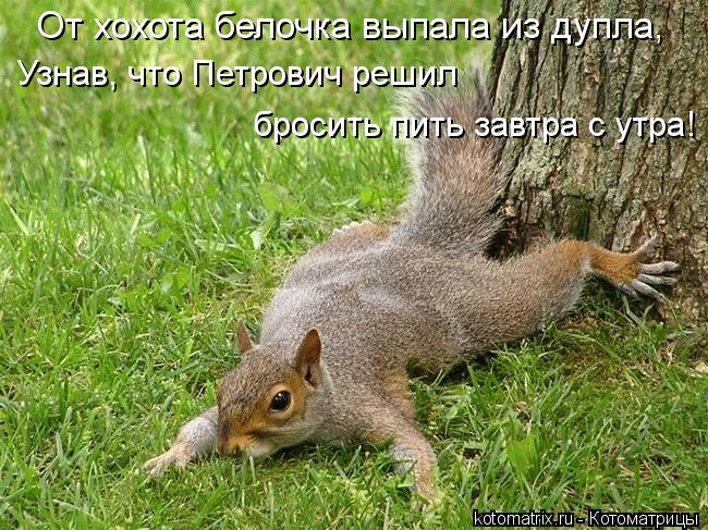 Котоматрица: От хохота белочка выпала из дупла, Узнав, что Петрович решил бросить пить завтра с утра!