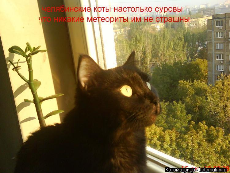 Котоматрица: челябинские коты настолько суровы что никакие метеориты им не страшны