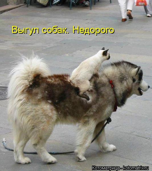 Котоматрица: Выгул собак. Недорого