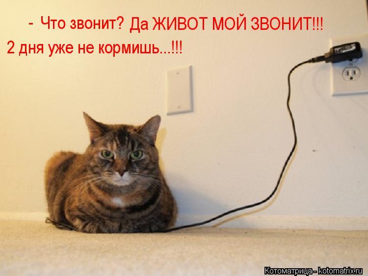 Котоматрица: Что звонит? -  Да ЖИВОТ МОЙ ЗВОНИТ!!! 2 дня уже не кормишь...!!!