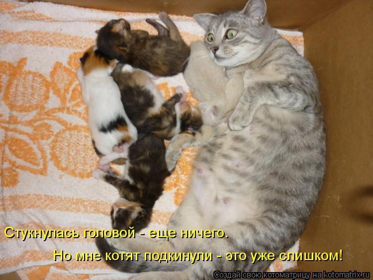 Котоматрица: Стукнулась головой - еще ничего. Но мне котят подкинули - это уже слишком!