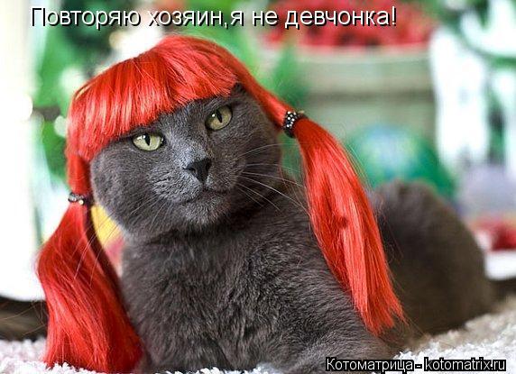 Котоматрица: Повторяю хозяин,я не девчонка!