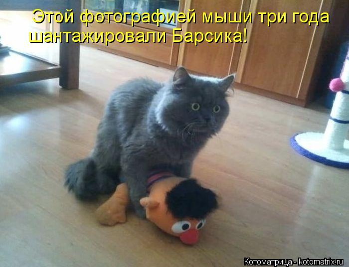 Котоматрица: Этой фотографией мыши три года шантажировали Барсика!