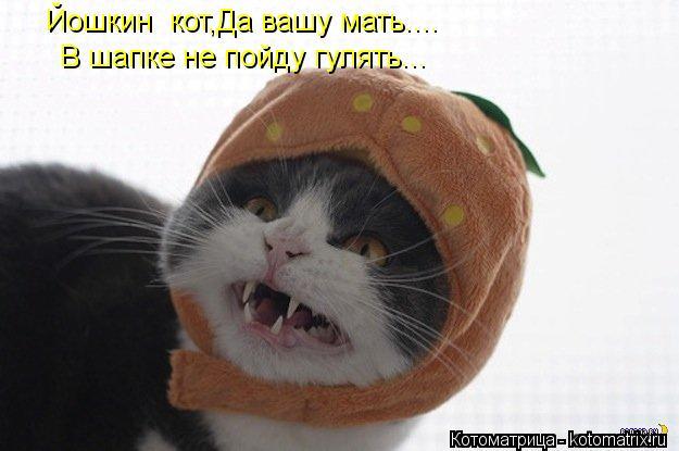 Котоматрица: Йошкин  кот,Да вашу мать.... В шапке не пойду гулять...