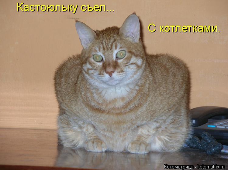 Котоматрица: Кастоюльку съел... С котлетками.