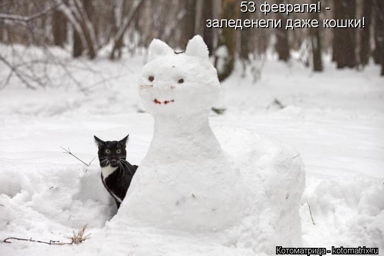 Котоматрица: 53 февраля! - заледенели даже кошки!
