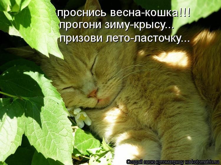 Котоматрица: проснись весна-кошка!!! прогони зиму-крысу... призови лето-ласточку...