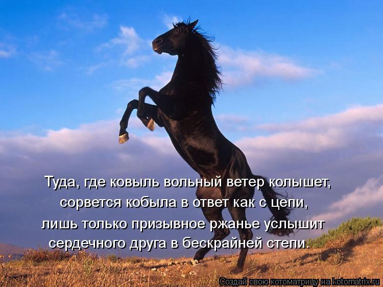 Котоматрица: Туда, где ковыль вольный ветер колышет, сорвется кобыла в ответ как с цепи, лишь только призывное ржанье услышит сердечного друга в бескрай