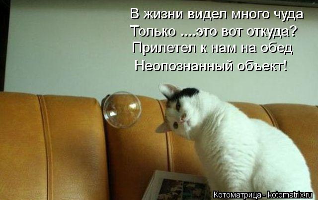 Котоматрица: В жизни видел много чуда Только ....это вот откуда? Прилетел к нам на обед Неопознанный объект!