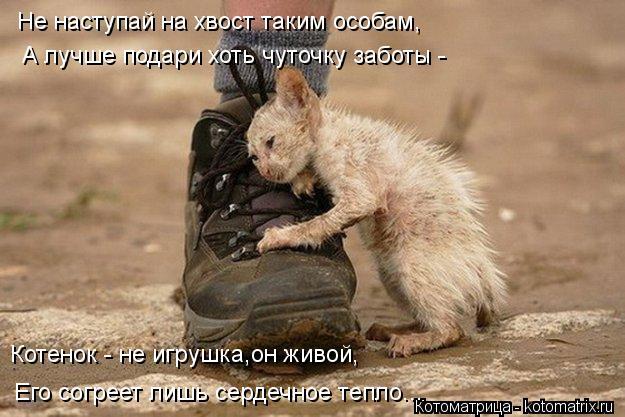 Котоматрица: Не наступай на хвост таким особам, А лучше подари хоть чуточку заботы -  Котенок - не игрушка,он живой, Его согреет лишь сердечное тепло...