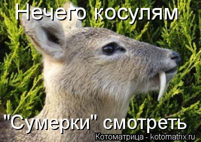 """Котоматрица: Нечего косулям """"Сумерки"""" смотреть"""