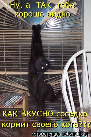 Котоматрица: Ну, а  ТАК  тебе  КАК ВКУСНО соседка  хорошо видно   кормит своего кота???