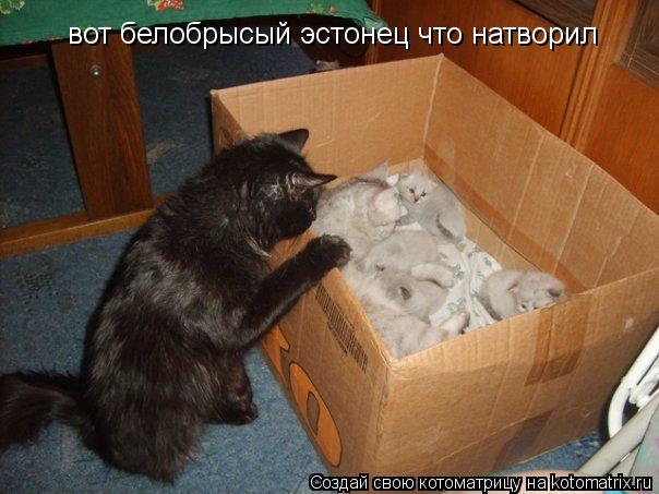 Котоматрица: вот белобрысый эстонец что натворил