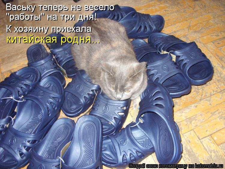 """Котоматрица: Ваську теперь не весело """"работы"""" на три дня! К хозяину приехала китайская родня..."""