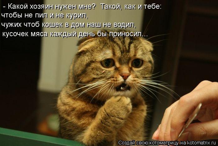 Котоматрица: - Какой хозяин нужен мне?   Такой, как и тебе:  кусочек мяса каждый день бы приносил... чтобы не пил и не курил, чужих чтоб кошек в дом наш не води