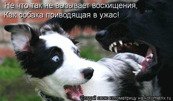 Котоматрица: Не что так не вызывает восхищения, Как собака приводящая в ужас!