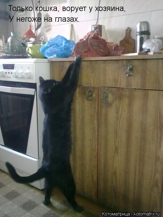 Котоматрица: Только кошка, ворует у хозяина, У негоже на глазах.