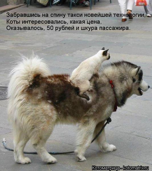 Котоматрица: Забравшись на спину такси новейшей технологии, Коты интересовались, какая цена. Оказывалось, 50 рублей и шкура пассажира.