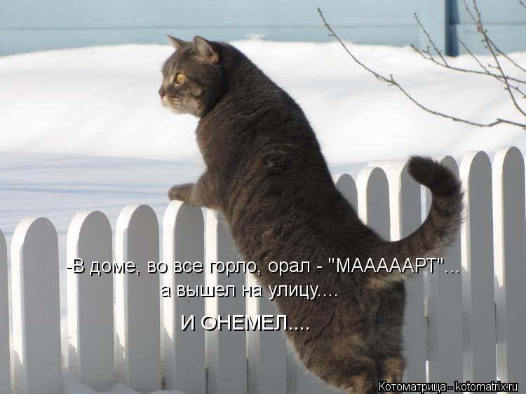 "Котоматрица: -В доме, во все горло, орал - ""МАААААРТ""... а вышел на улицу....  И ОНЕМЕЛ...."