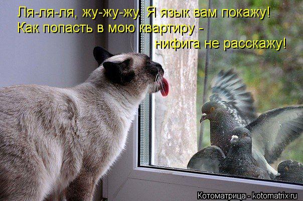 Котоматрица: Ля-ля-ля, жу-жу-жу. Я язык вам покажу! Как попасть в мою квартиру -  нифига не расскажу!