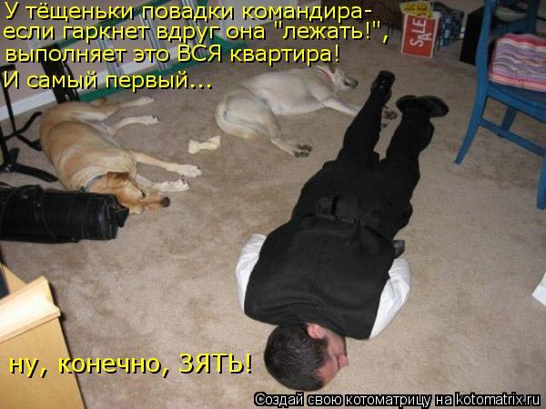 """Котоматрица: У тёщеньки повадки командира- если гаркнет вдруг она """"лежать!"""", выполняет это ВСЯ квартира! И самый первый... ну, конечно, ЗЯТЬ!"""