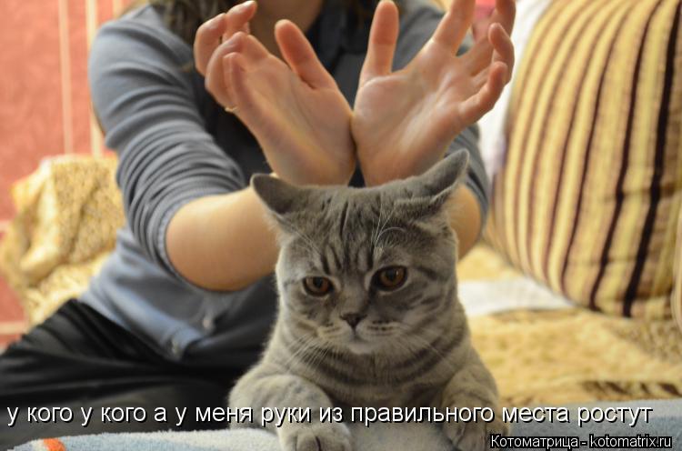 Котоматрица: у кого у кого а у меня руки из правильного места ростут