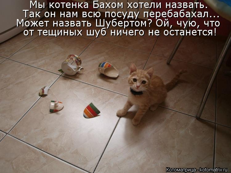 Котоматрица: Так он нам всю посуду перебабахал... Может назвать Шубертом? Ой, чую, что Мы котенка Бахом хотели назвать.  от тещиных шуб ничего не останется!