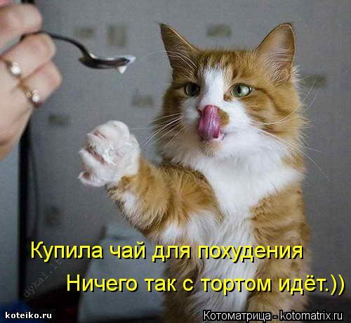 http://kotomatrix.ru/images/lolz/2013/03/27/kotomatritsa_nP.jpg