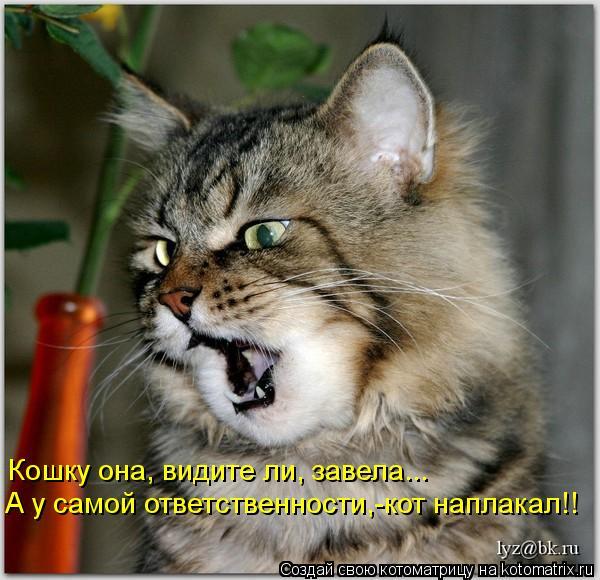 Котоматрица: Кошку она, видите ли, завела... А у самой ответственности,-кот наплакал!!