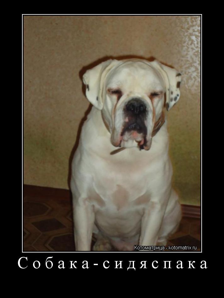 Котоматрица: Собака-сидяспака