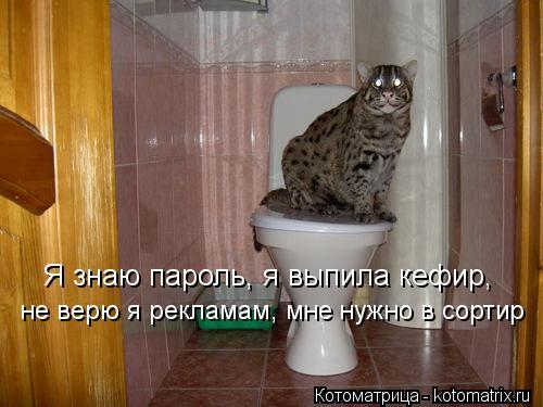 Котоматрица: Я знаю пароль, я выпила кефир,  не верю я рекламам, мне нужно в сортир