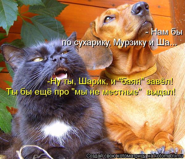 "Котоматрица: - Нам бы по сухарику, Мурзику и Ша... -Ну ты, Шарик, и ""баян"" завёл! Ты бы ещё про ""мы не местные""  выдал!"