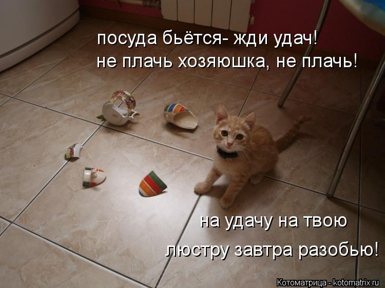 Котоматрица: посуда бьётся- жди удач! не плачь хозяюшка, не плачь! на удачу на твою люстру завтра разобью!