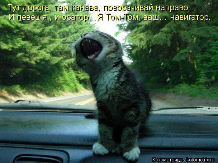 Котоматрица: Тут дорога, там канава, поворачивай направо…. И певец я , и оратор…Я Том-Том, ваш… навигатор.
