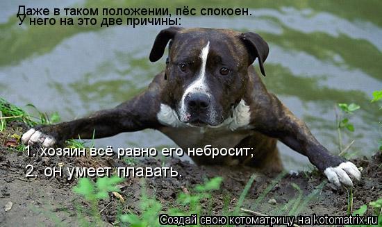 Котоматрица: Даже в таком положении, пёс спокоен. 1. хозяин всё равно его небросит; 2. он умеет плавать. У него на это две причины: