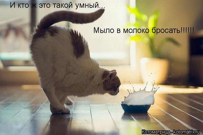 Котоматрица: И кто ж это такой умный... Мыло в молоко бросать!!!!!!