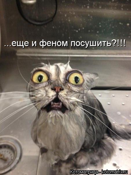 Котоматрица: ...еще и феном посушить?!!!