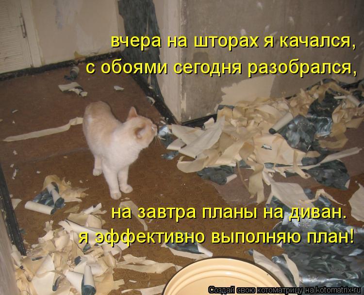 Котоматрица: вчера на шторах я качался, с обоями сегодня разобрался, на завтра планы на диван.  я эффективно выполняю план!