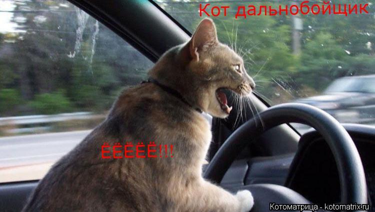 Котоматрица: ЁЁЁЁЁ!!! Кот дальнобойщик