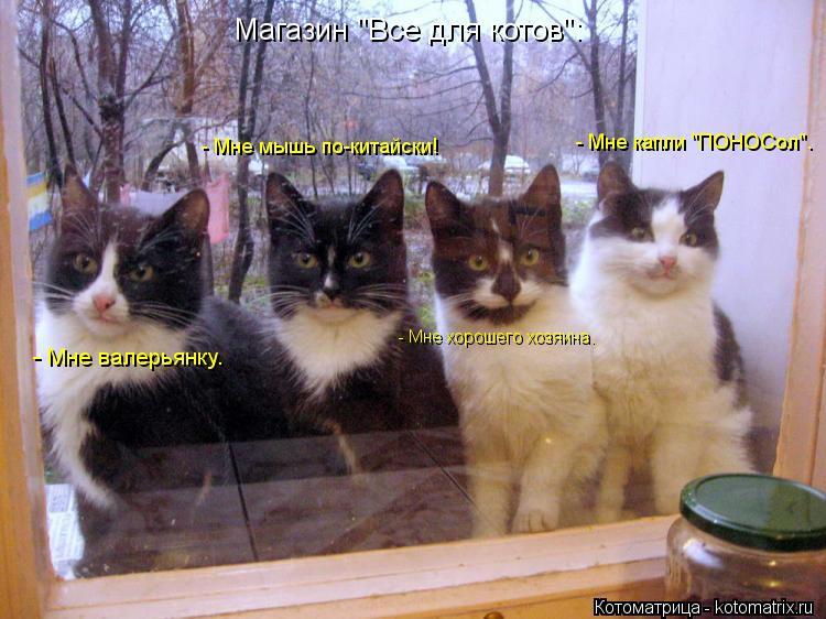"""Котоматрица: Магазин """"Все для котов"""": - Мне валерьянку. - Мне мышь по-китайски! - Мне хорошего хозяина. - Мне капли """"ПОНОСол""""."""