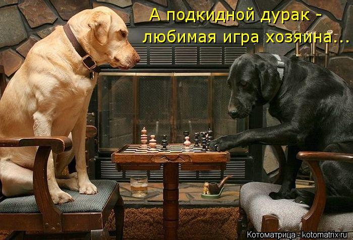 Котоматрица: А подкидной дурак -  любимая игра хозяина...