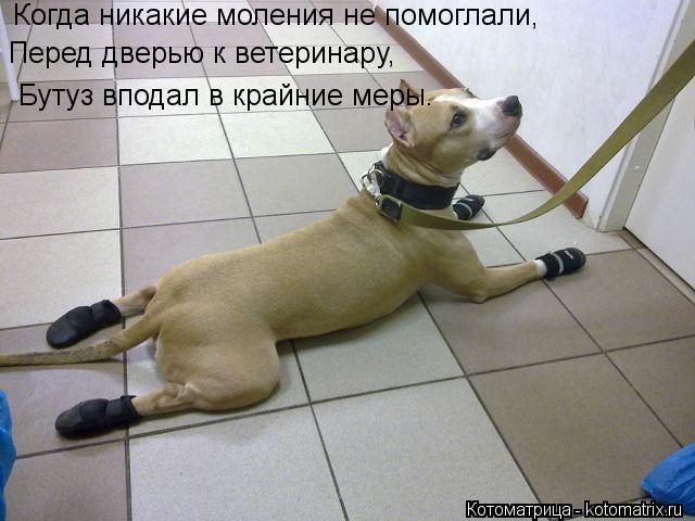 Котоматрица: Когда никакие моления не помоглали, Перед дверью к ветеринару,  Бутуз вподал в крайние меры.