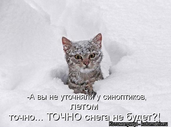 Котоматрица: -А вы не уточняли у синоптиков,  летом  точно... ТОЧНО снега не будет?!
