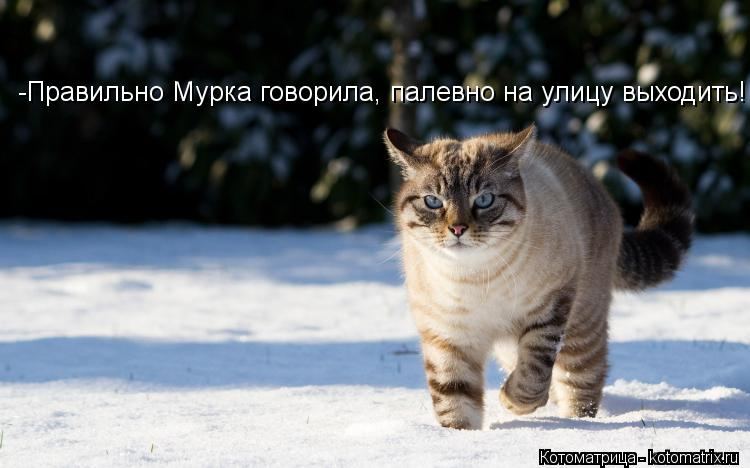 Котоматрица: -Правильно Мурка говорила, палевно на улицу выходить!