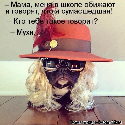 Котоматрица: – Мама, меня в школе обижают  и говорят, что я сумасшедшая!  – Кто тебе такое говорит?  – Мухи…