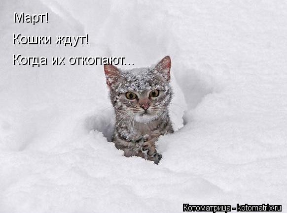 Котоматрица: Март! Кошки ждут! Когда их откопают...